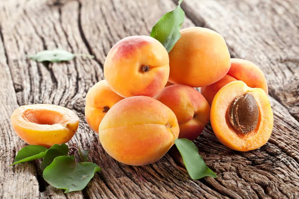Apricots Ready to be Dehydrated